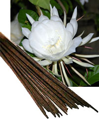 Night Queen Incense and Flower from India